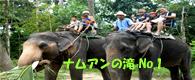 象トレッキング
