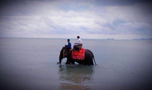 今日のサムイ島 12月30日 象とウエディングフォト