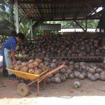 今日のサムイ島 8月20日 椰子工場