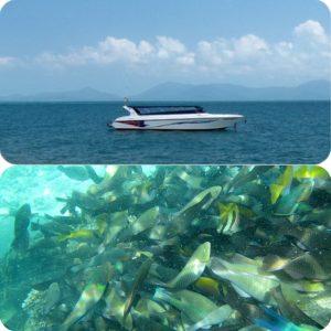 サムイ島発スピードボートで行くタオ島ナンユアン島シュノーケルツアー ナンユアン島ランチ