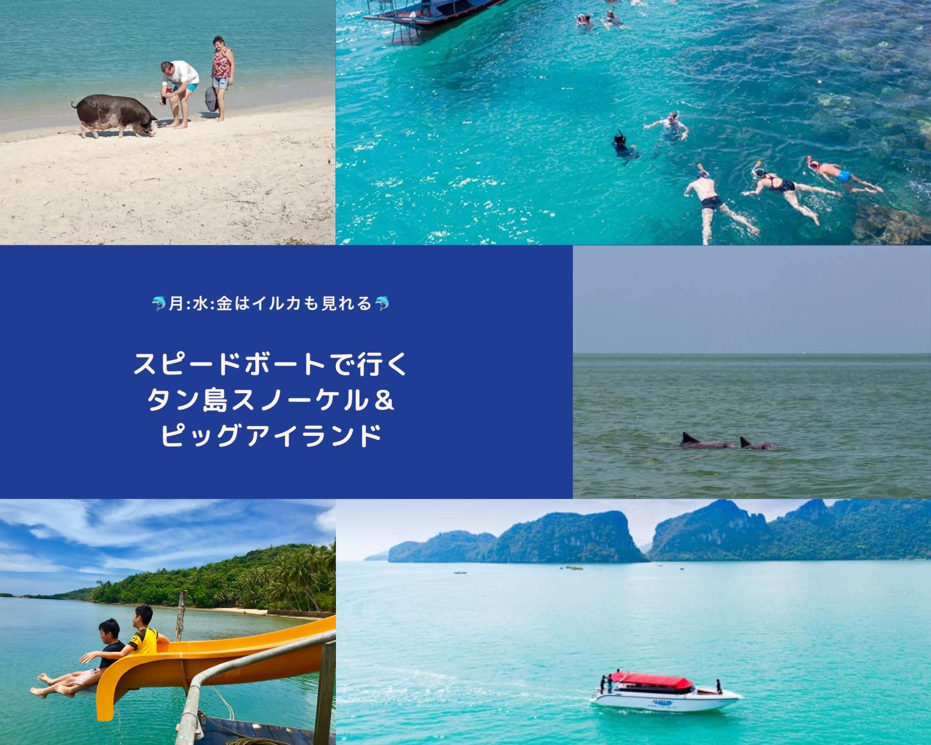 サムイ島発スピードボートで行くタン島&ピッグアイランド+イルカウオッチング